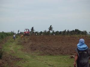 Die von TFM kultivierten Felder werden umgepflügt, die erhoffte Ernte wird zerstört.