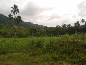 Ort der bevorstehenden Landübergabe an Menschenrechtsverteidiger auf Hacienda Diaz, Negos Oriental, IPON sieht sich um