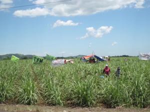 HRD von Hacienda Carmenchika errichteten ein Zeltlager auf dem besetzten Stück Land.